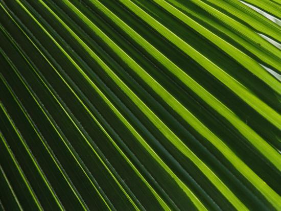 nicole-duplaix-close-view-of-a-palm-plant