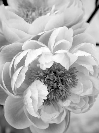 nicole-katano-delicate-blossom-iii