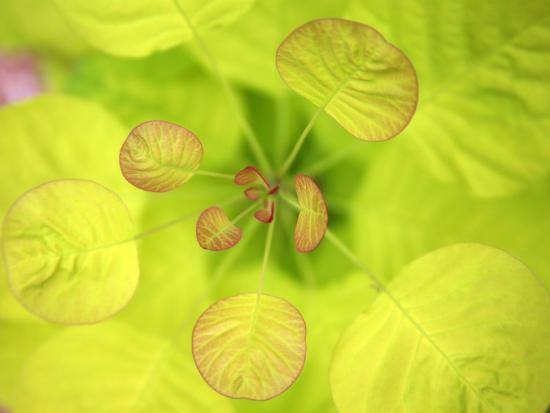 nicole-katano-fresh-bloom-ii