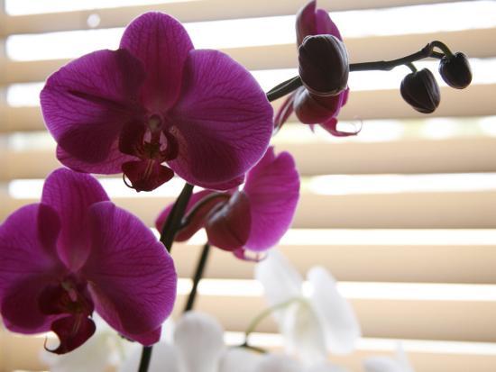 nicole-katano-purple-orchids-ii