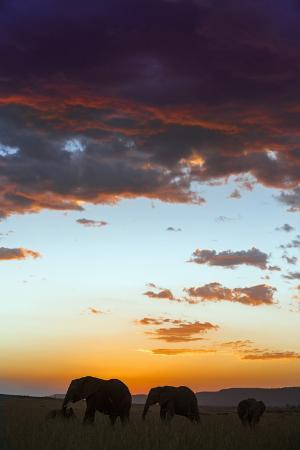 nigel-pavitt-kenya-narok-county-masai-mara-elephants-silhouetted-against-a-beautiful-sky-at-sunset