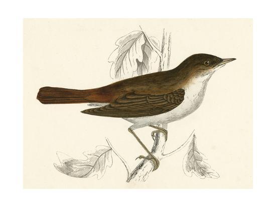nightingale-morris