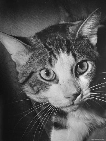 nina-leen-cat-being-used-by-scientists-conducting-psychology-testing-at-brooklyn-college