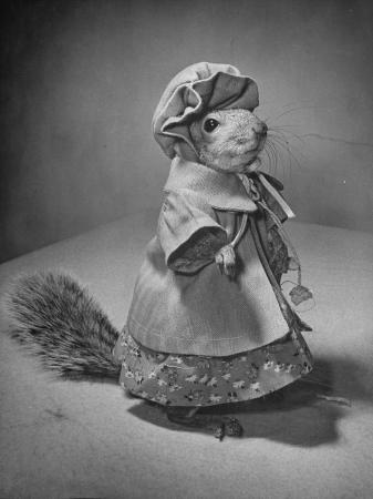 nina-leen-squirrel-wearing-a-baby-doll-s-dress