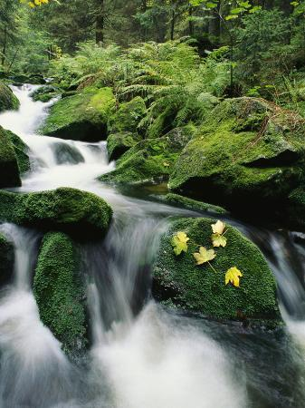 norbert-rosing-mountain-stream-cascading-around-moss-covered-rocks