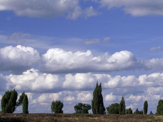 norbert-rosing-tall-junipers-against-a-cloud-filled-sky