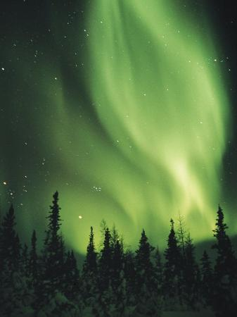 norbert-rosing-the-aurora-borealis-shimmers-in-the-sky-above-silhouetted-evergreeens