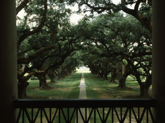 oak-trees-in-front-of-a-mansion-oak-alley-plantation-vacherie-louisiana-usa