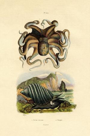 octopus-1833-39