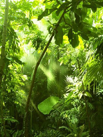 odmeyer-tropical-forest-trees-in-sunlight-and-rain
