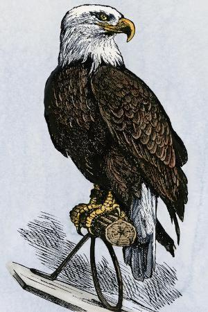 old-abe-the-bald-eagle-mascot-of-wisconsin-s-iron-brigade-us-civil-war