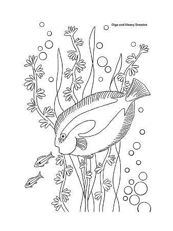 olga-and-alexey-drozdov-coral-fish-9