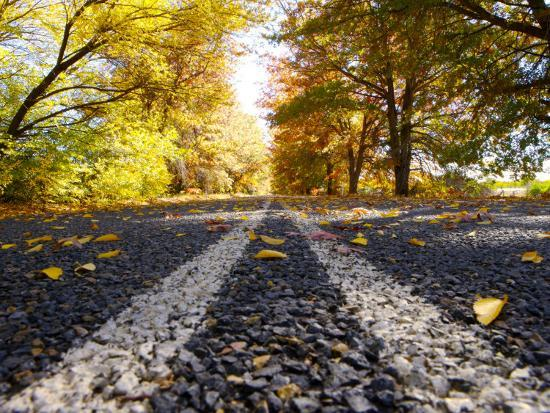 oliver-strewe-autumn-leaves-on-old-federal-highway