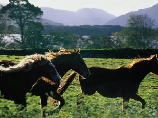 oliver-strewe-three-horses-cantering-through-field-ireland