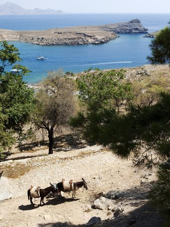 oliviero-olivieri-two-donkeys-in-the-st-paul-bay-lindos-rhodes-dodecanese-greek-islands-greece-europe