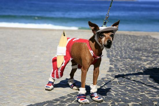 ostill-ipanema-surfer-dog