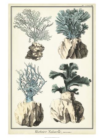 oversize-coral-species-iii