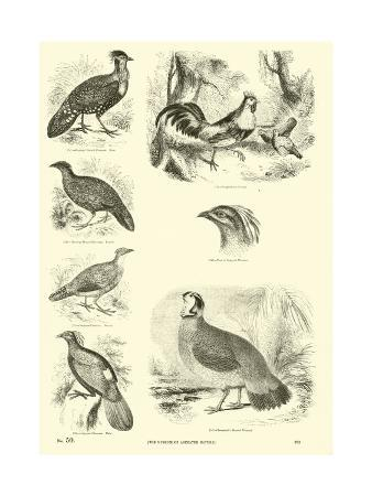 page-from-the-pictorial-museum-of-animated-nature