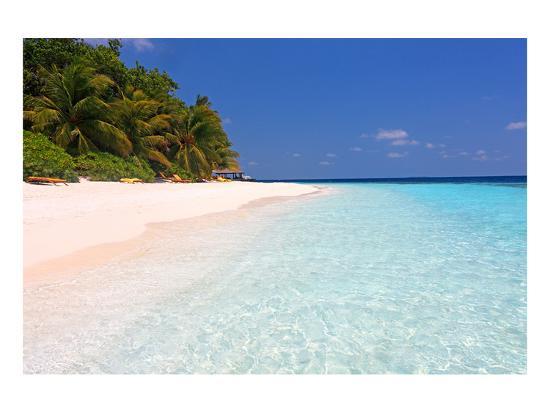 palm-lined-beach-at-the-angsana-ihuru-hotel-ihuru-island-north-male-atoll-maldives