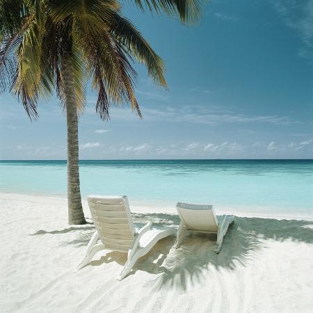 palm-tree-and-beach-chair