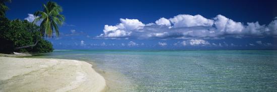 palm-tree-on-the-beach-french-polynesia