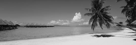 palm-tree-on-the-beach-moana-beach-bora-bora-tahiti-french-polynesia