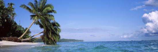 palm-trees-on-the-beach-indonesia