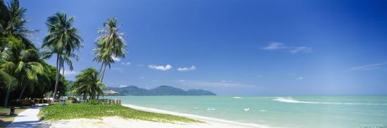 palm-trees-on-the-beach-penang-malaysia