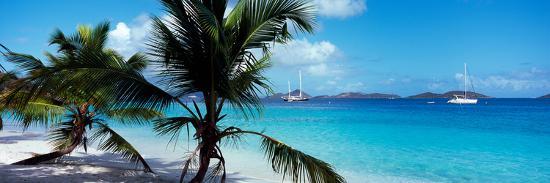palm-trees-on-the-beach-salomon-beach-virgin-islands-national-park-st-john-us-virgin-islands