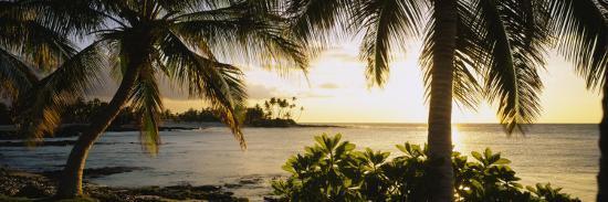 palm-trees-on-the-coast-kohala-coast-big-island-hawaii-usa