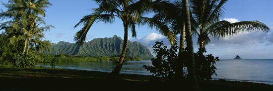 palm-trees-on-the-waterfront-kaneohe-bay-oahu-hawaii-usa