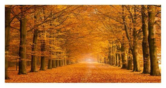 pangea-images-woods-in-autumn