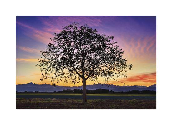 paolo-de-faveri-tree-of-life
