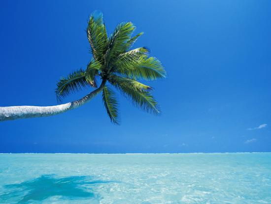 papadopoulos-sakis-palm-tree-overhanging-the-sea-male-atoll-maldives-indian-ocean