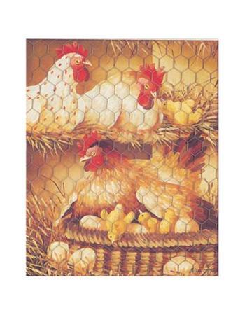 pascal-cessou-poule-rousse