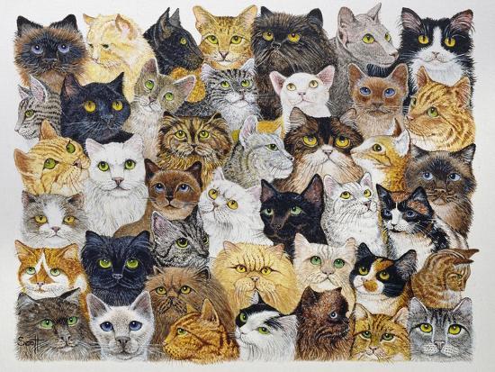 pat-scott-just-the-cat-s-whisker