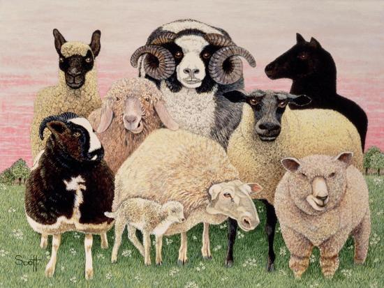 pat-scott-shepherds-delight