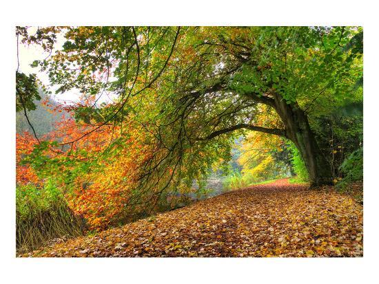 path-under-a-big-autumn-tree