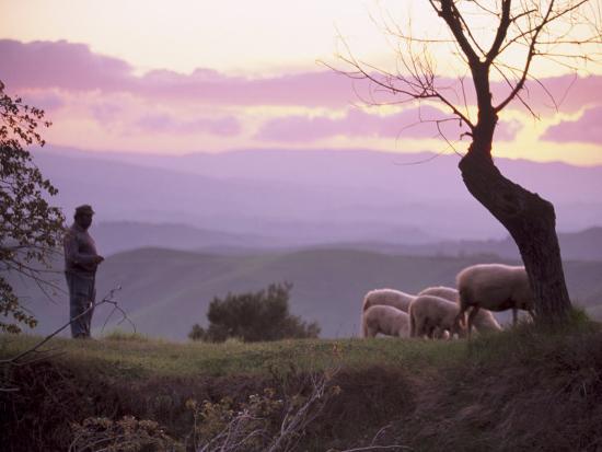 patrick-dieudonne-shepherd-and-sheep-at-dusk-near-volterra-tuscany-italy-europe