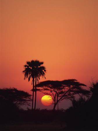paul-allen-tranquil-scene-of-trees-silhouetted-against-the-sun-at-sunset-okavango-delta-botswana-africa