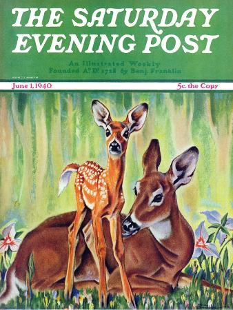 paul-bransom-doe-and-fawn-in-forest-saturday-evening-post-cover-june-1-1940