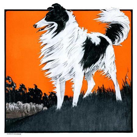 paul-bransom-sheepdog-oversees-flock-june-14-1924