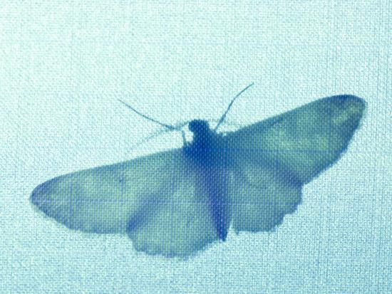 paul-colangelo-dr-john-mclean-collects-moths-using-black-light-and-mercury-stanley-park-british-columbia-canad