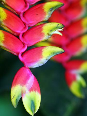 paul-kennedy-colourful-shitulli-flower