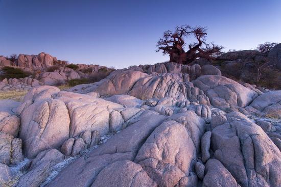 paul-souders-baobab-tree-at-dusk-kubu-island-botswana
