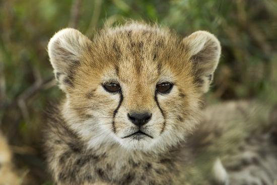 paul-souders-cheetah-cub-at-ngorongoro-conservation-area-tanzania