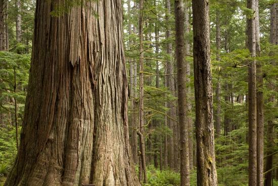 paul-souders-coastal-rainforest-bc-canada
