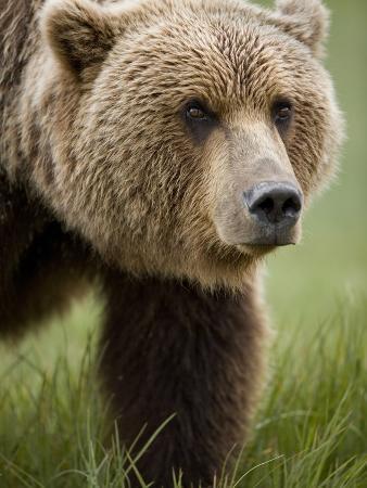 paul-souders-grizzly-bear-kukak-bay-katmai-national-park-alaska