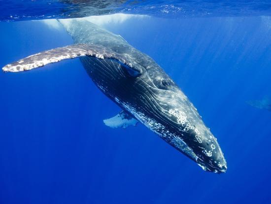 paul-souders-humpback-whale-underwater