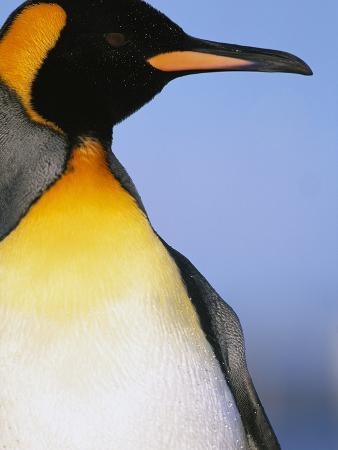paul-souders-king-penguin